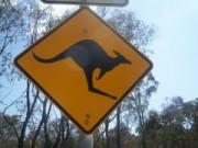 kangaroo-test2