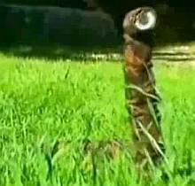 Robot Spy Snake