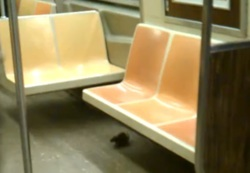 Ratten in New Yorker U-Bahn